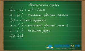 Фонетический разбор слова «ель»