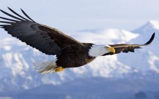 Фонетический разбор «орёл»